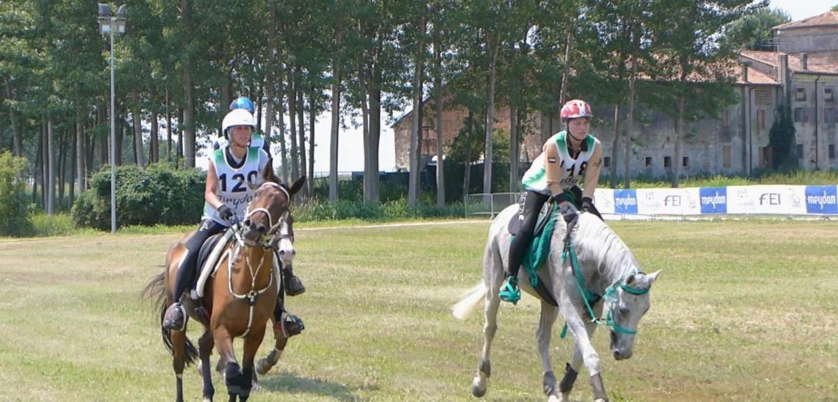 cavalli arabi Isola della Scala
